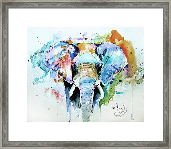 Splash Of Colour Framed Print by Steven Ponsford