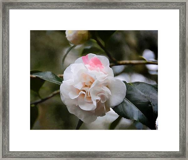 Splash Of Pink Framed Print