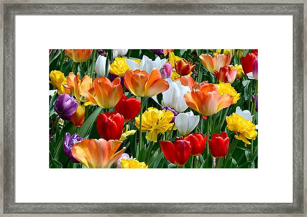 Framed Print featuring the photograph Splash Of Spring by William Jobes