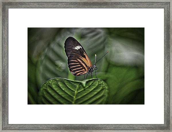 Splash Of White Framed Print