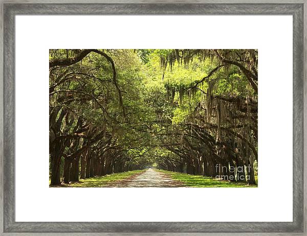 Splendid Oak Drive Framed Print