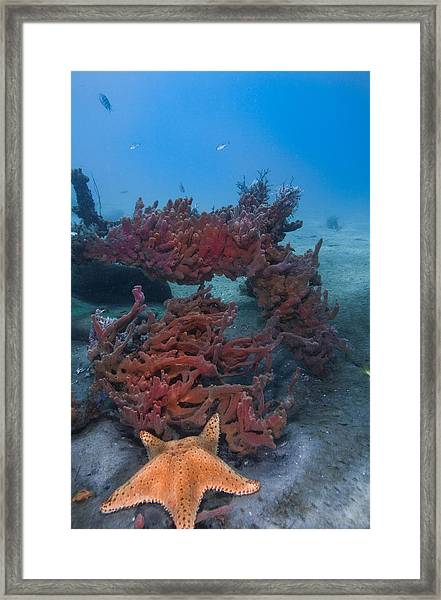 Sponges And A Star Framed Print