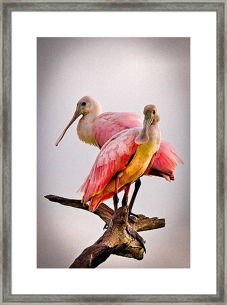 Framed Print featuring the photograph Spoonbills II by Debra and Dave Vanderlaan