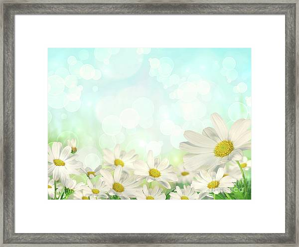 Spring Background With Daisies Framed Print