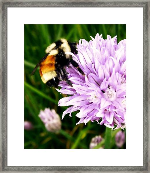Framed Print featuring the photograph Spring Bee by Gigi Dequanne