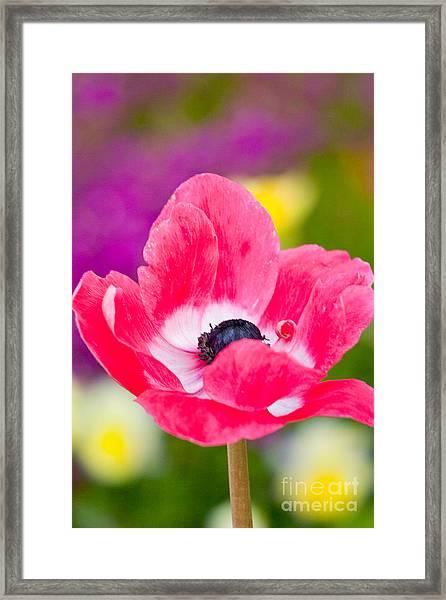 Spring Colors   Framed Print