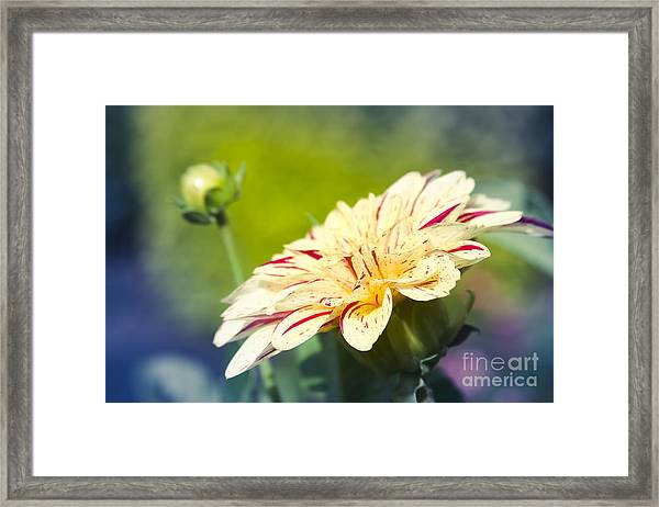 Spring Dream Jewel Tones Framed Print
