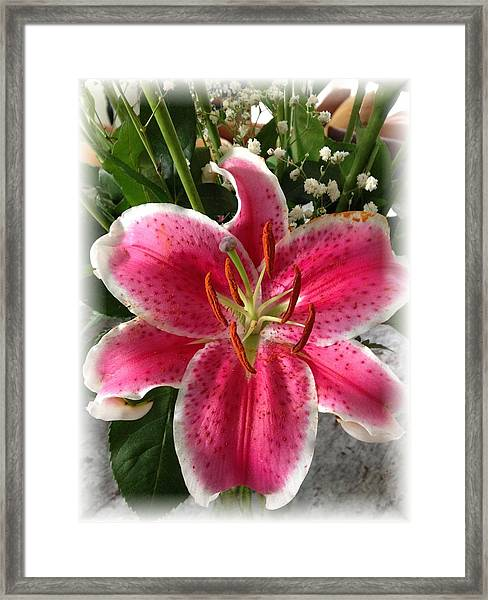 Spring Flower Collection 3 Framed Print