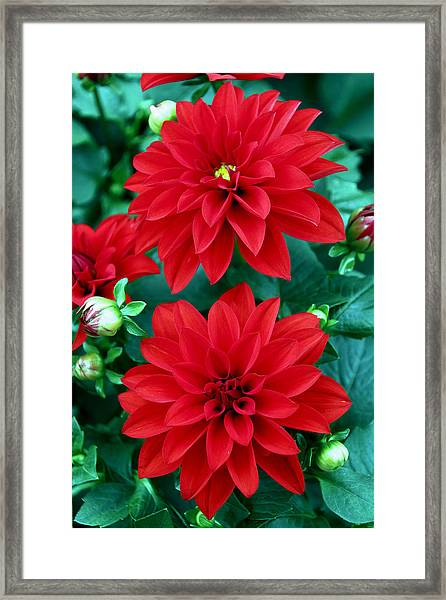 Framed Print featuring the photograph Spring Flowers 5 by Bob Slitzan