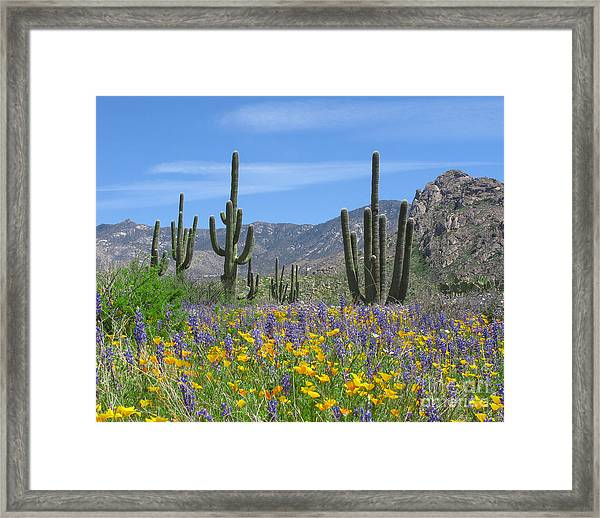 Spring Flowers In The Desert Framed Print by Elvira Butler