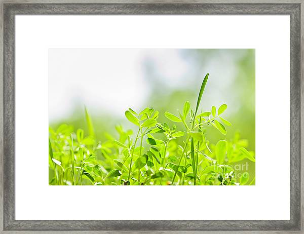 Spring Green Sprouts Framed Print