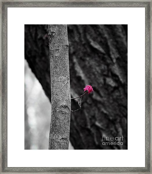 Spring Maple Growth Framed Print