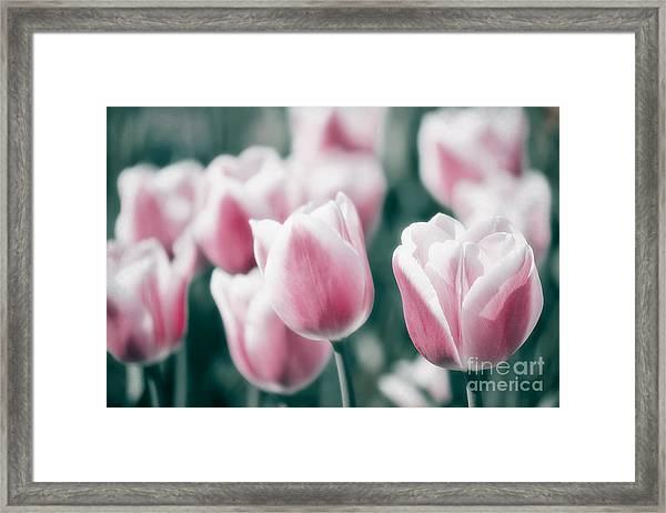 Spring In Love Framed Print