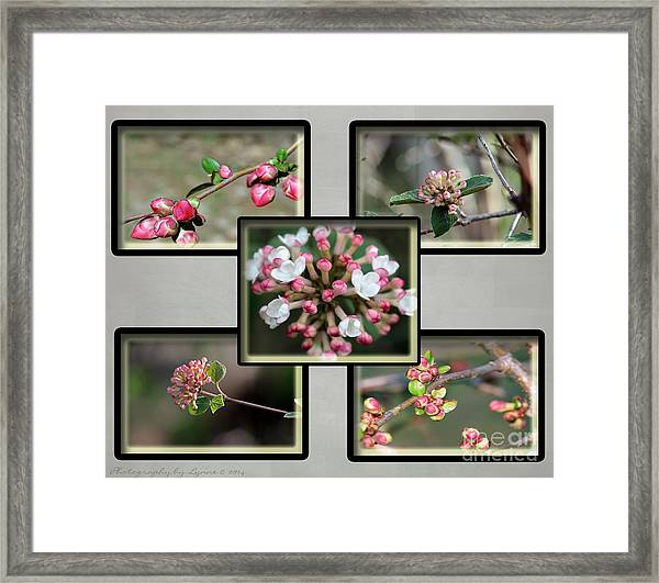 Spring Is Here - Gray Framed Print