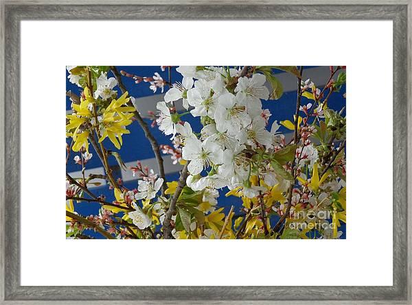 Spring Life In Still-life Framed Print