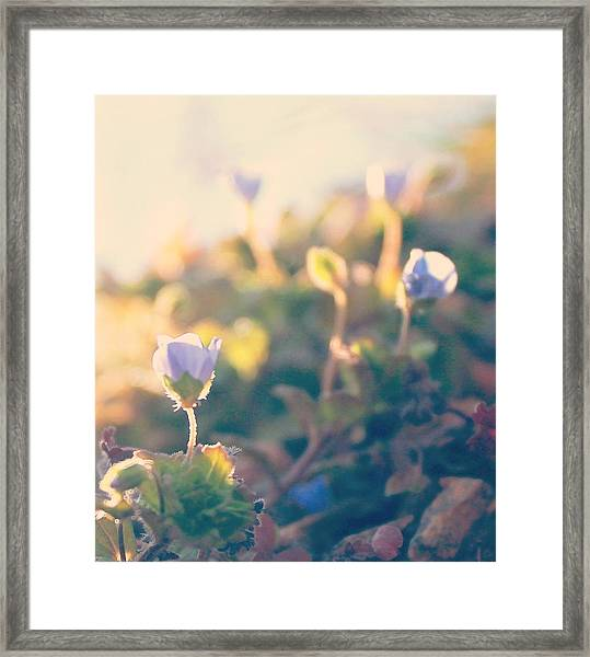 Spring Light And Wildflowers Framed Print