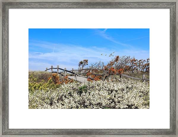 Spring On Cape Cod Framed Print
