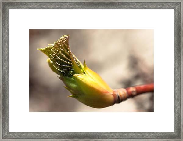 Spring Renewal Framed Print