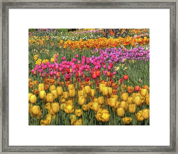 Spring Sensations Framed Print