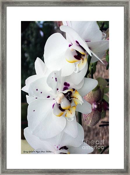 Spring Splash Orchid Framed Print