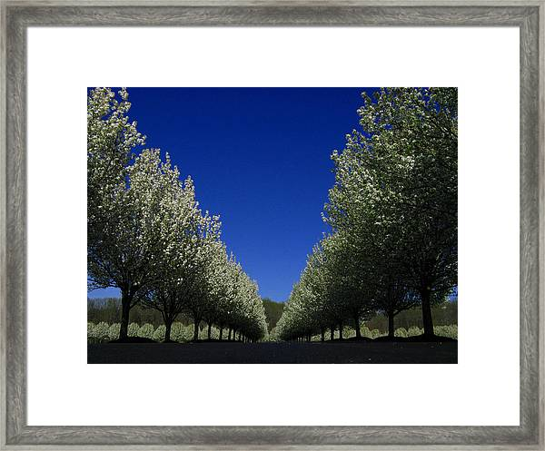 Spring Tunnel Framed Print