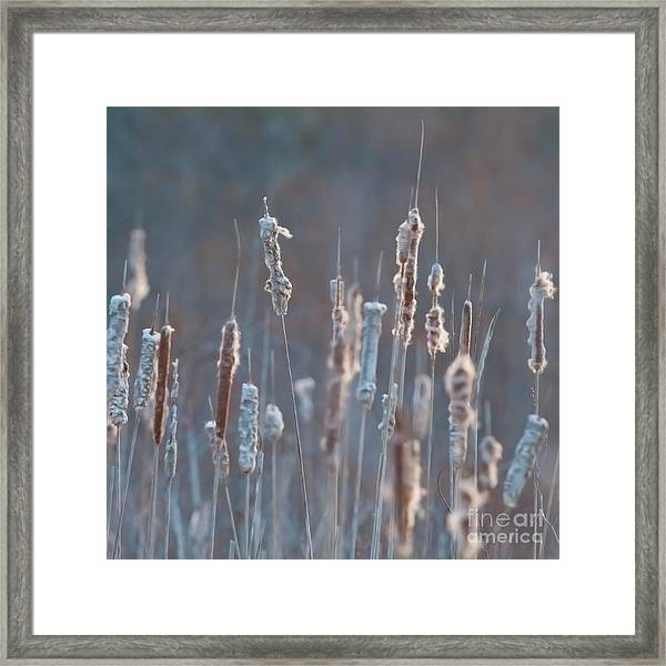 Spring Whisper... Framed Print