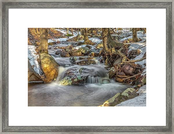Spring Woods Framed Print