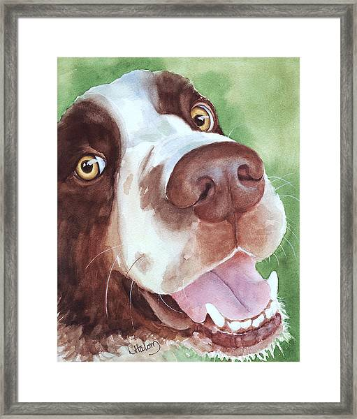 Springer Framed Print