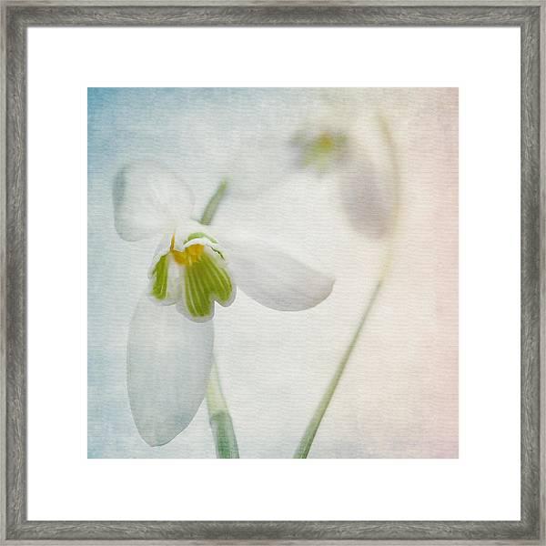 Springflower Framed Print