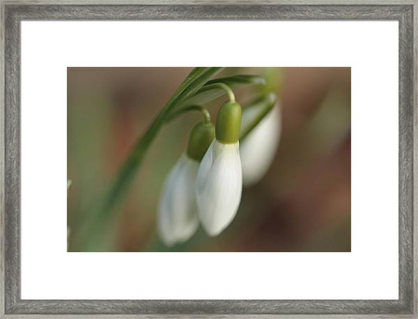 Springtime In Motion Framed Print