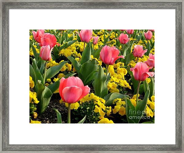 Springtime In South Framed Print