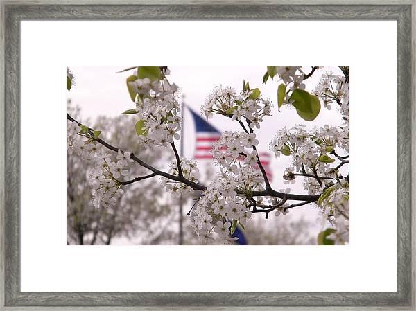 Springtime In The South Framed Print