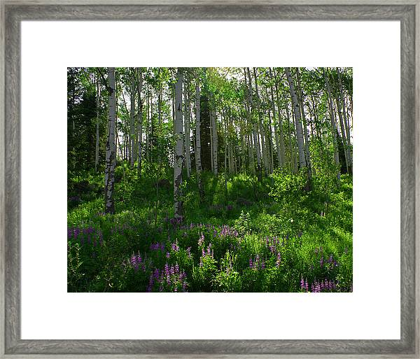 Springtime On The Grand Mesa Framed Print