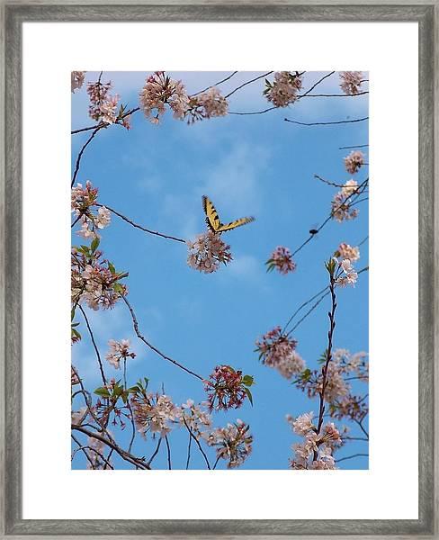 Heaven Sent Framed Print