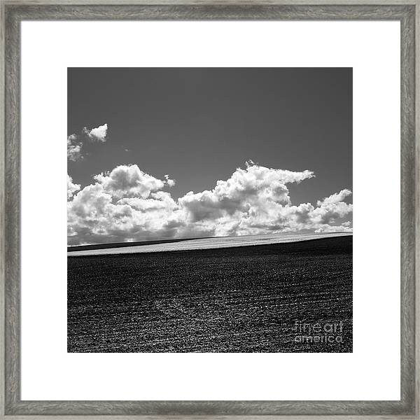 Sprouting Field Of Sunflowers And Field Of Rape At Back. Auvergne. France Framed Print
