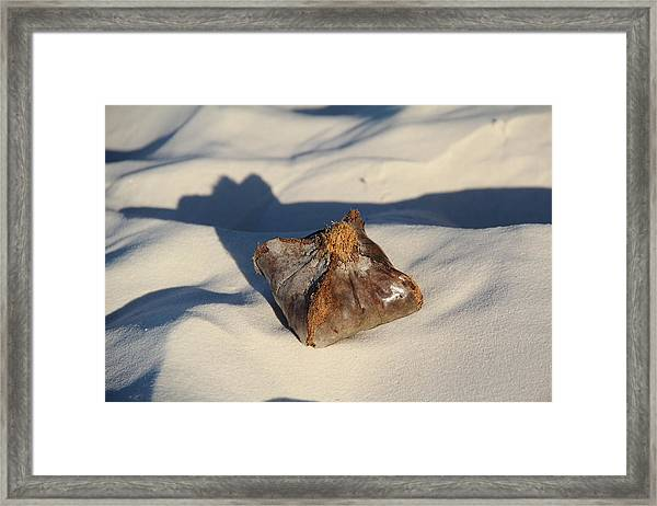 Framed Print featuring the photograph Square Coconut by Debbie Cundy