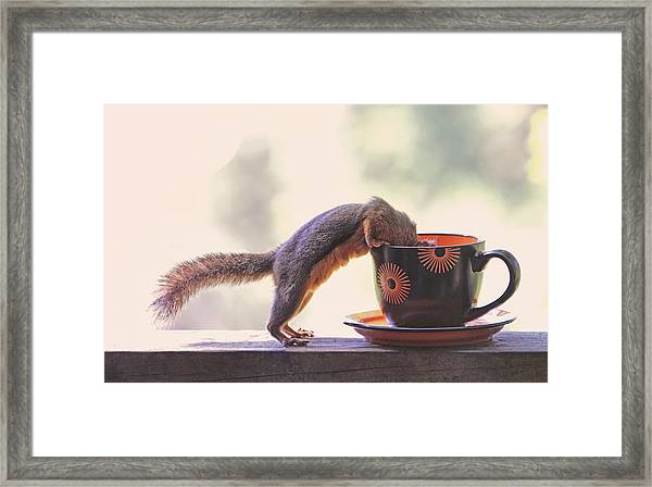 Squirrel And Coffee Framed Print