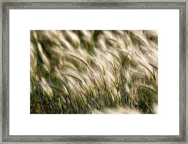 Squirrel Grass Framed Print