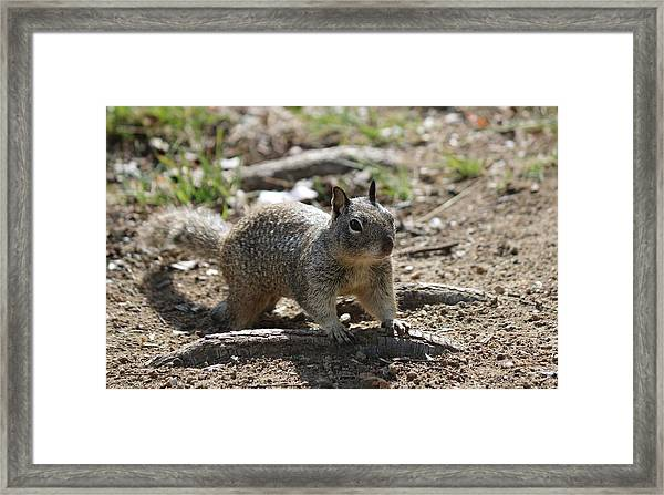 Squirrel Play  Framed Print