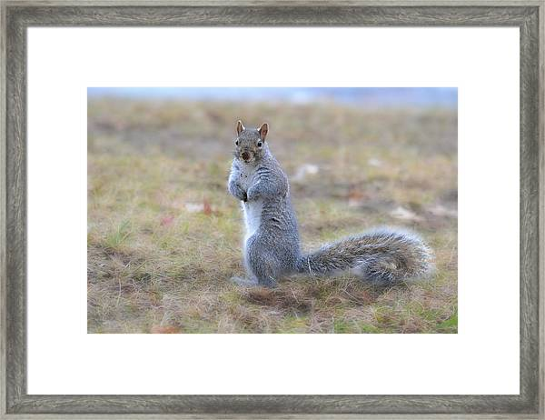 Framed Print featuring the photograph Squirrel With Dirt On Nose by Beth Sawickie