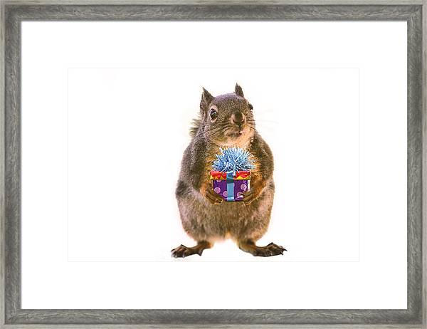 Squirrel With Gift Framed Print