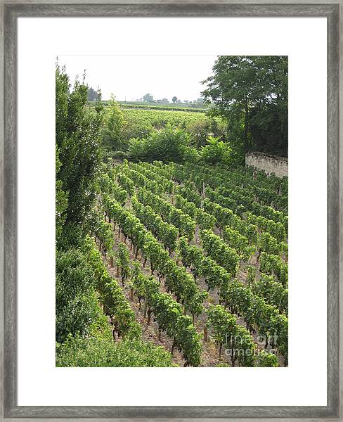 St. Emilion Vineyard Framed Print