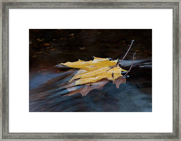 Stacked Autumn Leaves On Water Framed Print