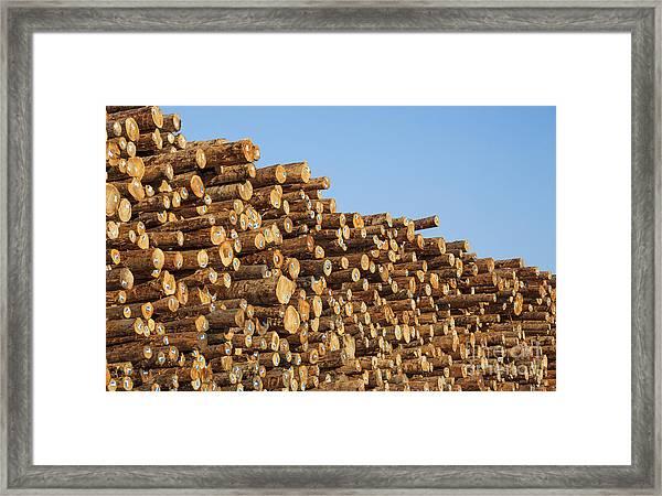 Stacks Of Logs Framed Print