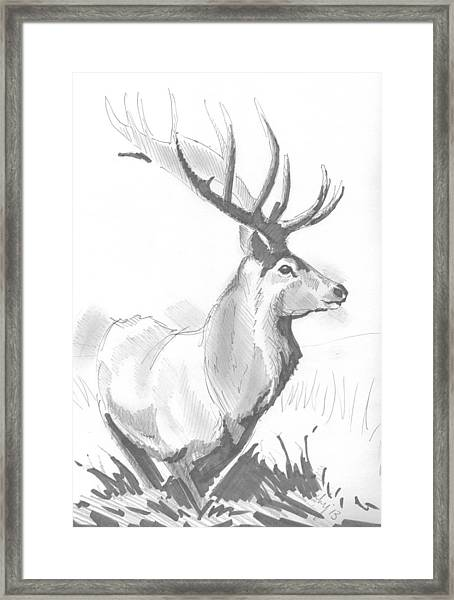 Stag Drawing Framed Print