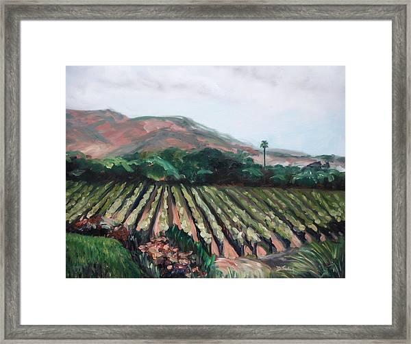 Stag's Leap Vineyard Framed Print