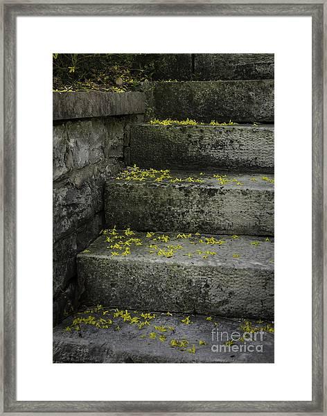 Stairway To Spring Framed Print