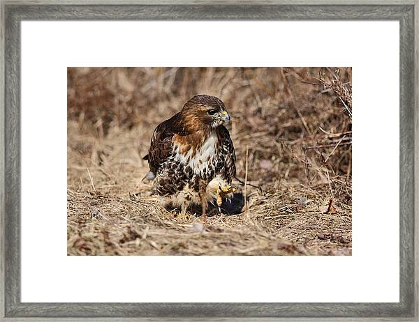 Stalking Framed Print