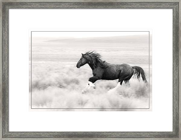 Stallion Blur Framed Print