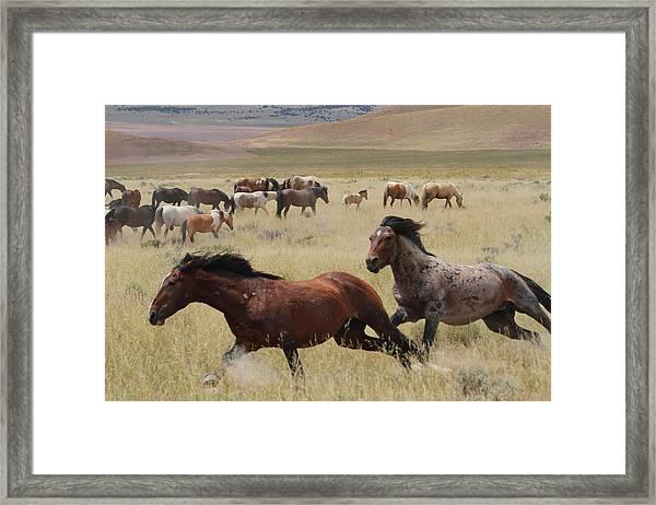 Stallion Chase Framed Print by Gene Praag